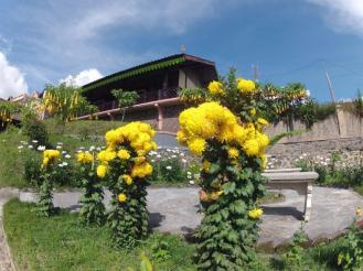 Cafe Lava Hostel landscape